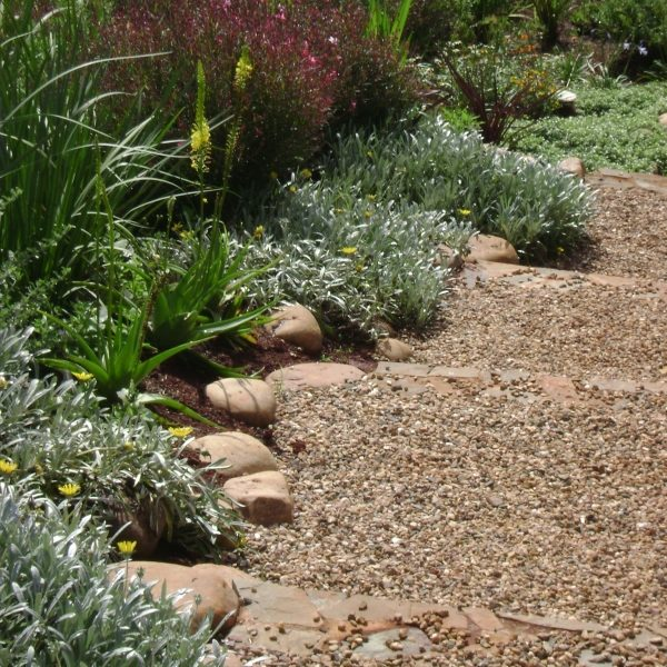 Natural-garden-2: Stone steps with gravel and mixed ground-covers and perennials in Victoria Country Club Estate in Pietermaritzburg, KZN.