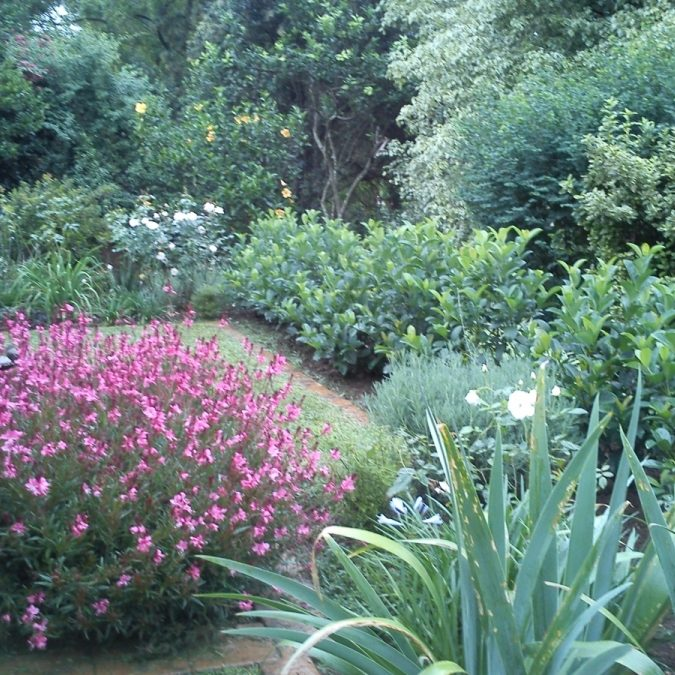 Formal-garden-6: Garden landscaped in Woodgrove retirement village, Pietermaritzburg with cobble edging, gravel garden feature and beds planted with pink Gaura.