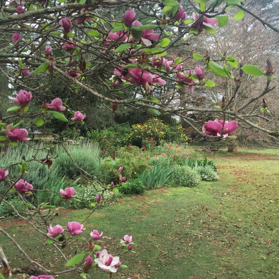 Country-garden-4: Magnolia with Mixed herbaceous border in this farm garden in Hilton KZN midlands.